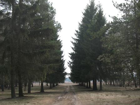 Лес, с.Ушомир