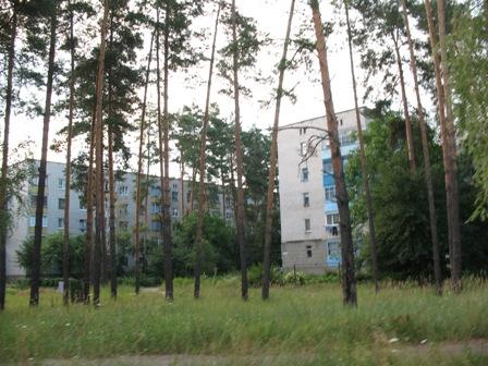 Практически все многоэтажки находятся в лесу