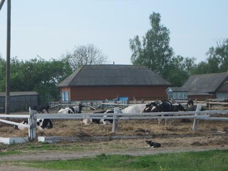 Коровники с.Фосня