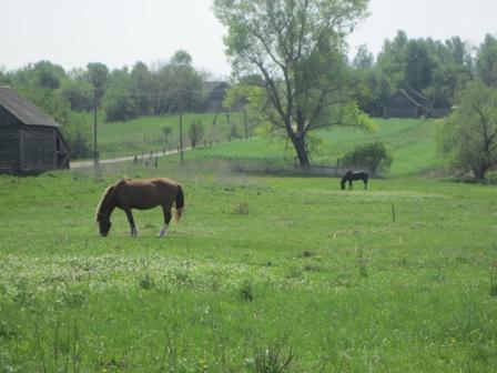 Эх вы кони, мои кони...